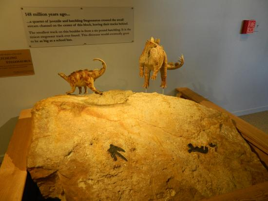 Morrison Natural History Museum: Baby Stegosaurus tracks with models
