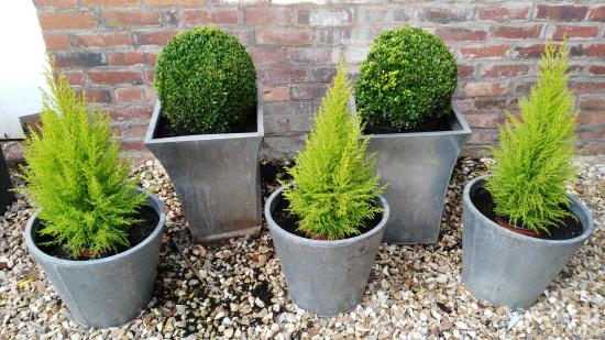 Budleigh Salterton, UK: Beautiful plants