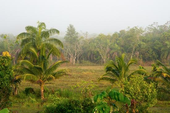 Super Palm Resort: Misty morning on the grounds.
