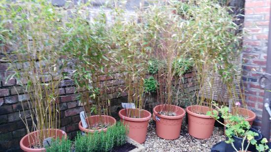 Budleigh Salterton, UK: More plants