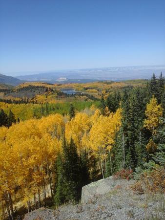 Grand Junction, CO: Lovely views of the golden aspens.