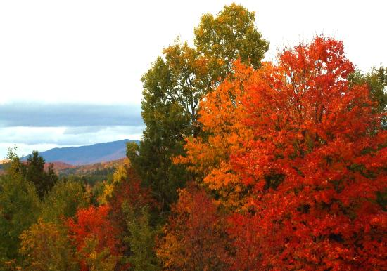 Laurentian Mountains Photo