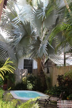 hot tub with big beautiful palm above picture of key west bed and rh tripadvisor com