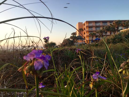 Coral Sands Inn & Seaside Cottages Ormond Beach: Beach View of Hotel
