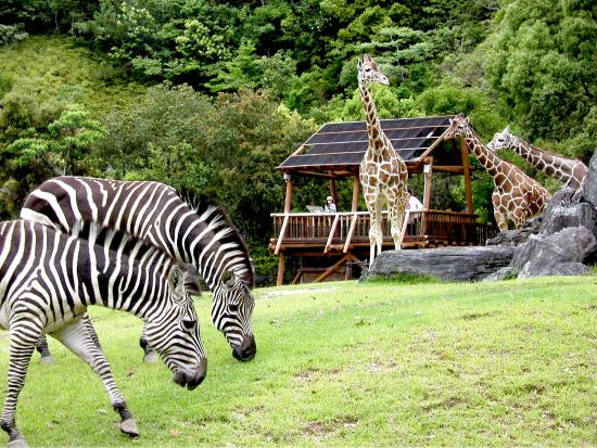 Noichi Zoological Park of Kochi Prefecture
