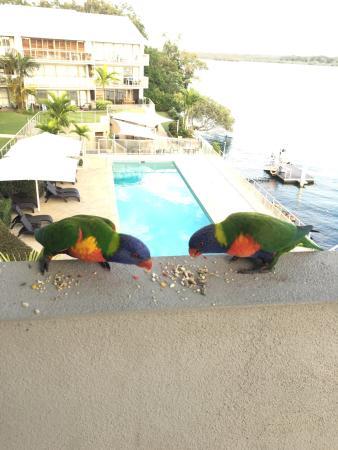Noosa Shores Resort: photo5.jpg