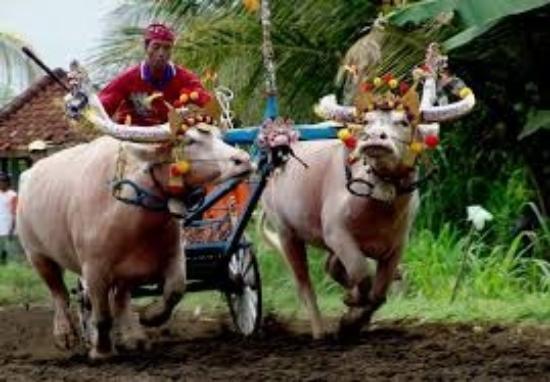 Agung Bali Transport