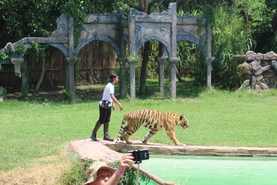 photo0 jpg picture of bali safari marine park gianyar tripadvisor rh tripadvisor com