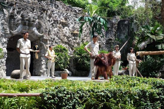 photo2 jpg picture of bali safari marine park gianyar tripadvisor rh tripadvisor com