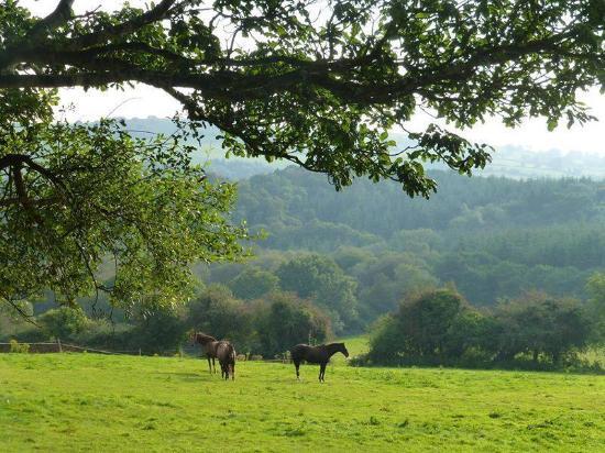 Lee Valley Equestrian Centre