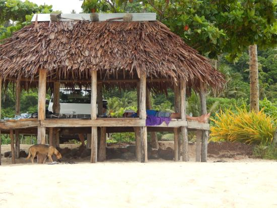 Lalomanu Beach: relaxing in the fale - friendly local dog...