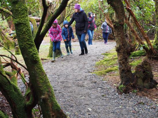 Woodland Faerie Trail: Lovely Woodland Walk, Faerie Trail Achill