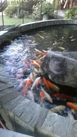 Sabin Resort Hotel: the fishpond (koi) serves as a good side attraction