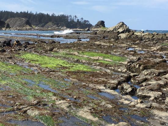 Oceanside Beachfront RV Resort: photo0.jpg