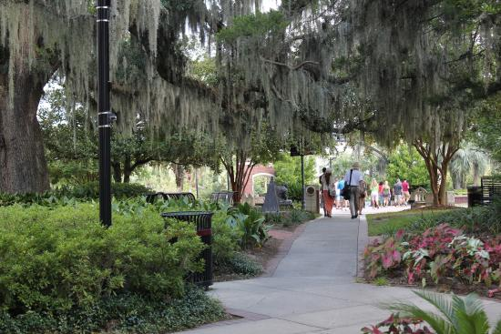A campus path under dripping spanish moss - Picture of Florida State ...