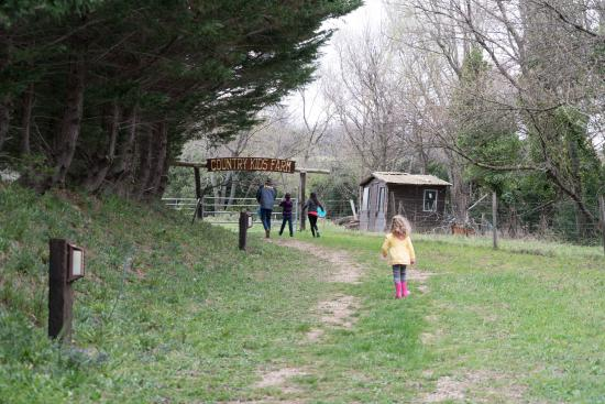 Cabrieres, Francia: You can walk to the animals from your rooms very easily