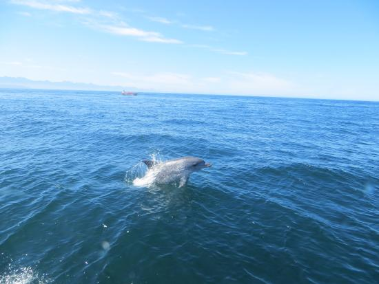 Offshore Adventures: dolphins