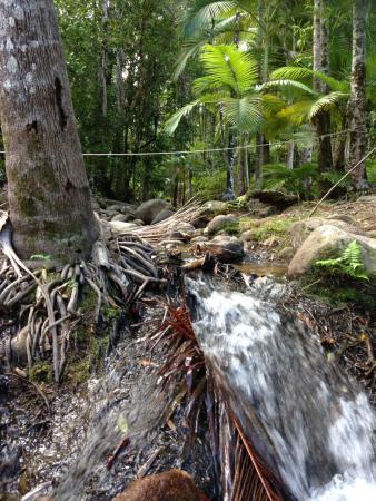 Platypus Bush Camp : The running stream.