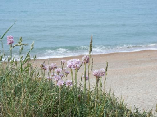 Eype's Mouth Country Hotel: The beach just down the lane
