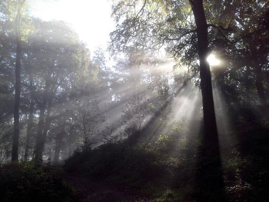Tuam, Ierland: Foggy walk
