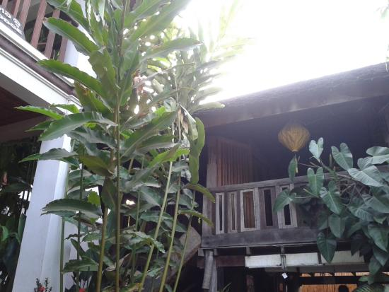 Lao Lu Lodge: ต้นไม้