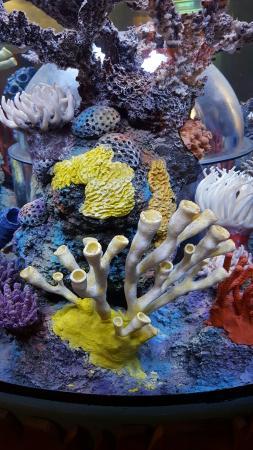 20160406 135523 Picture Of Sea Life Aquarium