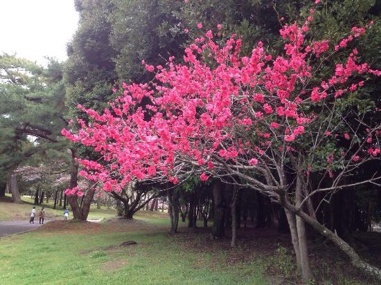 Beppu Park - 別府市、別府公園の写真 - トリップアドバイザー