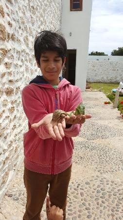 Ghazoua, Fas: my son enjoying all creatures great and small