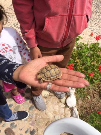 Ghazoua, Fas: Wildlife