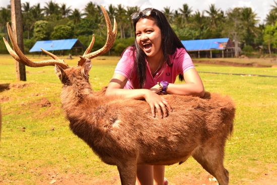 Camarines Sur Province, Philippinen: Friendly deer reading for picture taking