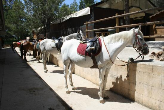 Bunyola, Spanien: Horses for all levels