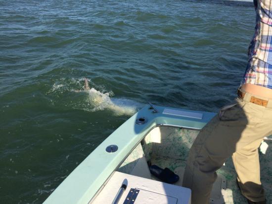 Boca Grande, FL: Leighton in action