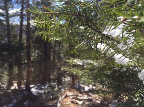 Adirondack, estado de Nueva York: Frosty foliage in March