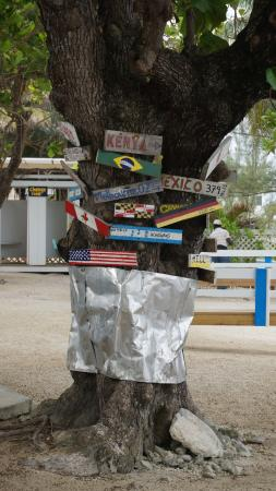 George Town, Grand Cayman: Don Foster's Tree