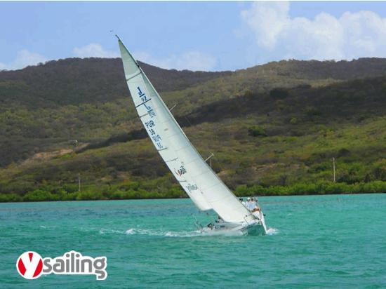 Y Sailing