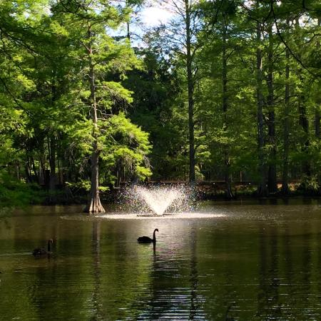 Swan Lake Iris Gardens: Swan Lake Iris Garden in Sumter, SC is absolutely breathtaking! It is a very serene and relaxing