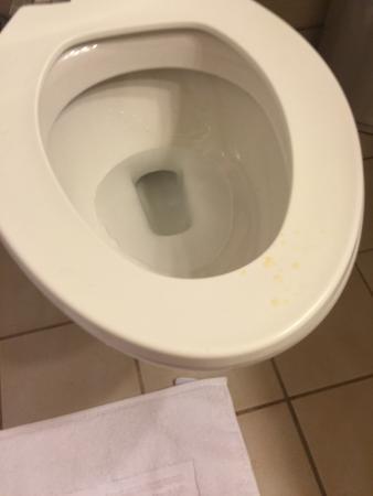 Sault Ste. Marie, Kanada: Really gross dried urine on toilet seat.