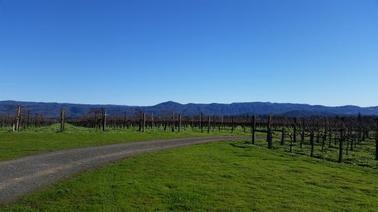 Hendry Ranch Wines: Beautiful view of vines in December