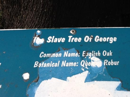 The Old Slave Tree Photo
