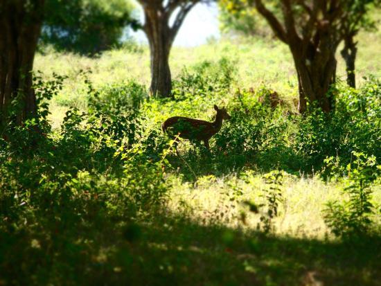 Nature Resort Tissamaharama: photo1.jpg
