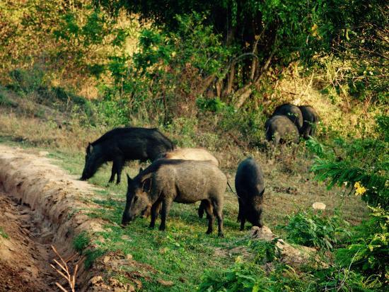 Nature Resort Tissamaharama: photo2.jpg
