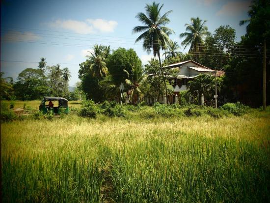 Nature Resort Tissamaharama: photo3.jpg