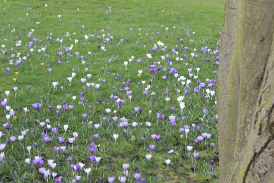 Downing College: Flowering bulbs