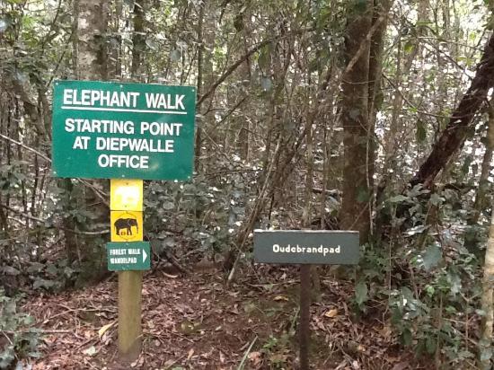 Elephant Walk Photo
