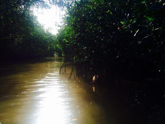 St. Ann's, Τρινιντάντ: Caroni swamp
