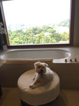pet friendly hotel picture of capella singapore sentosa island rh en tripadvisor com hk