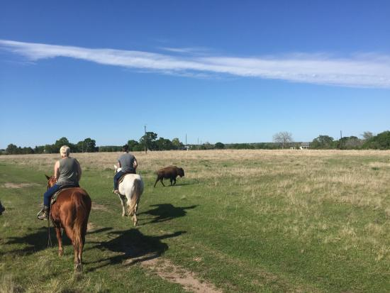Chappell Hill, Teksas: Riding the Range….baby buffalo and open pastures!