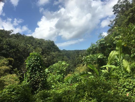 Jungle Tours St. Lucia : Beautiful views