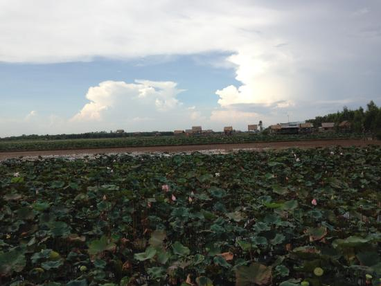 Dong Thap Province, เวียดนาม: Thap Muoi's lotus field