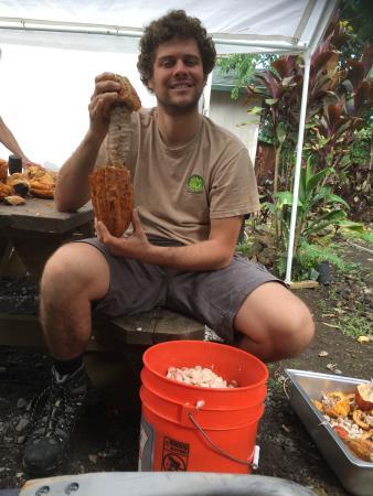 Hana Gold Cacao Plantation